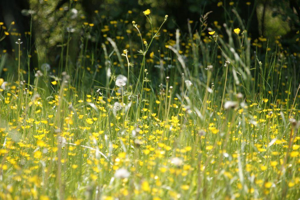 meadow-123280
