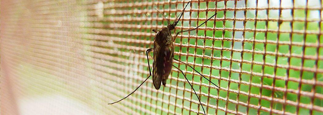 U nas sezon na moskitiery trwa cały rok!