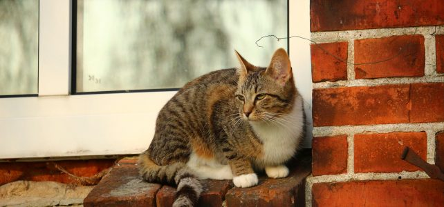 Bezpieczne zwierzę w domu. Siatki okienne zabezpieczające koty.