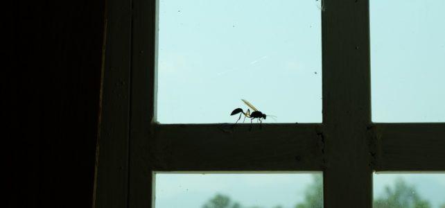 Moskitiery przeciw owadom i przeciw gryzoniom. Jak przygotować okna do odbioru Sanepidu?